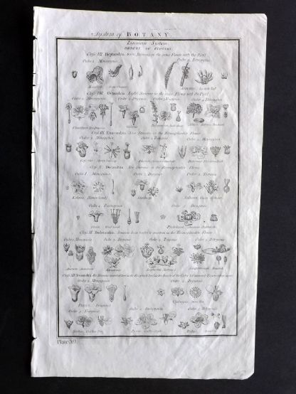Howard 1796 Folio Antique Print. System of Botany 39